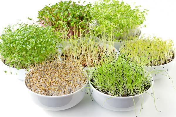 Tipos de germinados y cómo hacerlos - Tipos de germinados comestibles - los mejores