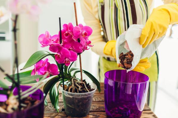 Abono para orquídeas: cómo hacerlo