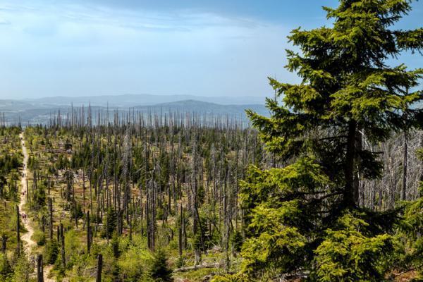 Causas de la deforestación - Imágenes de deforestación