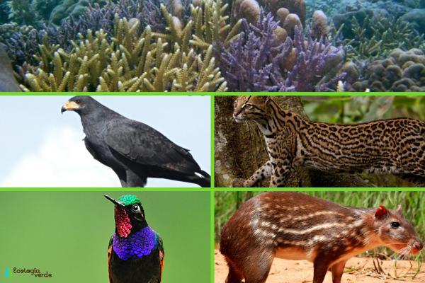 Flora y fauna de Veracruz - Fauna de Veracruz