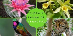 Flora y fauna de Veracruz