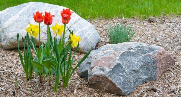 Convierte un jardín en un paraíso de biodiversidad - Crear refugios bajo las piedras