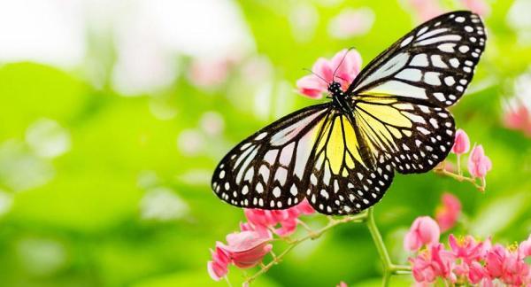 Convierte un jardín en un paraíso de biodiversidad - Un ecosistema en equilibrio