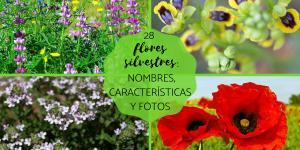 Flores silvestres: nombres y fotos