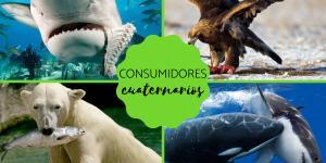 Consumidores cuaternarios: qué son y ejemplos