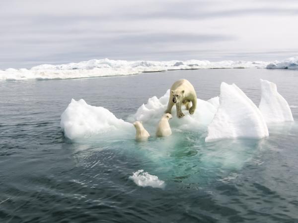 Efectos del cambio climático - Deshielo de los polos y glaciares y aumento del nivel del mar