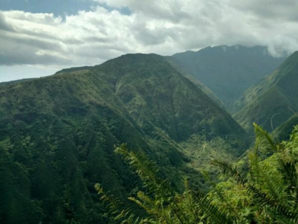 Selva alta: características, flora y fauna - Características de la selva alta