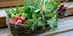 Los beneficios de la agricultura ecológica