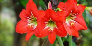 Plantas angiospermas: qué son, características y ejemplos