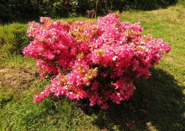 Qué son los arbustos - Tipos de arbustos