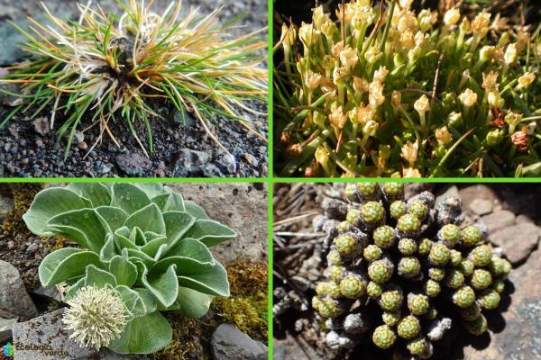 Flora y fauna de la Antártida - Flora de la Antártida