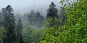 Cómo influye la vegetación en el clima