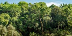Selva Misionera o Paranaense: características, animales y plantas