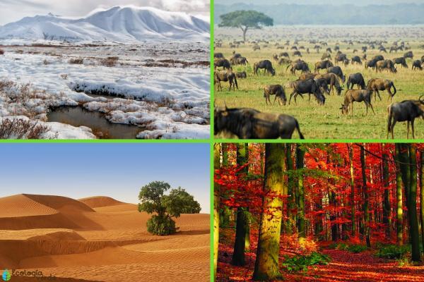 Tipos de biomas terrestres - Características de los biomas terrestres