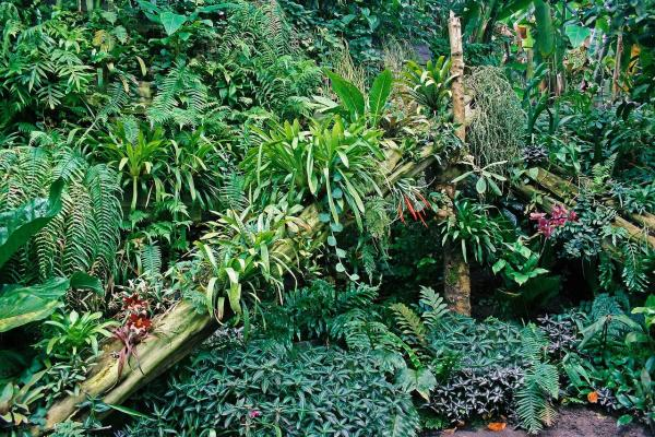 Tipos de biomas terrestres - Selva tropical