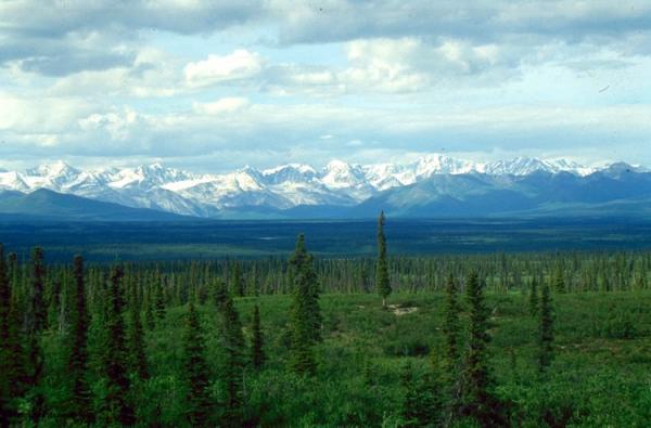 Tipos de biomas terrestres - Taiga, otro de los biomas terrestres importantes