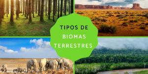 Tipos de biomas terrestres