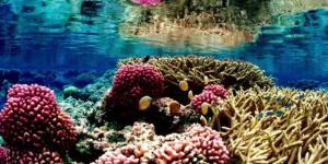 Ecosistema marino: qué es, características, flora y fauna