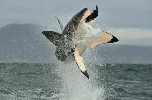Ecosistema marino: qué es, características, flora y fauna - Fauna de los ecosistemas marinos