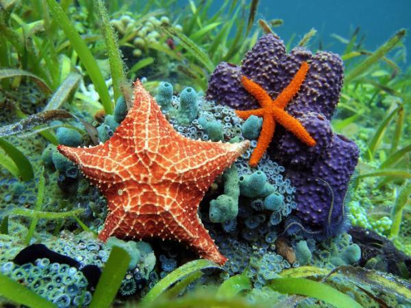 Ecosistema marino: qué es, características, flora y fauna - Qué son los ecosistemas marinos