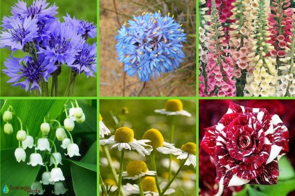 Flora y fauna de Alemania - Flora de Alemania