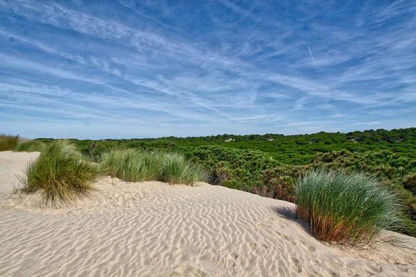 Principales Parques Naturales de España - Parque Nacional y Natural de Doñana, en Andalucía