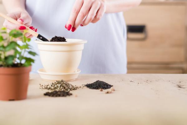 Cómo cuidar las plantas de interior - Sustrato y maceta para las plantas de interior