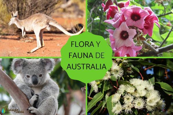 Flora y fauna de Australia
