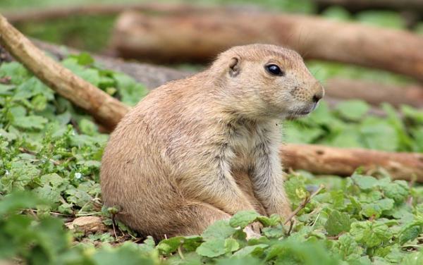 Qué animales hibernan y por qué - Qué animales hibernan - lista y ejemplos