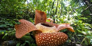 Las plantas más raras del mundo y sus nombres