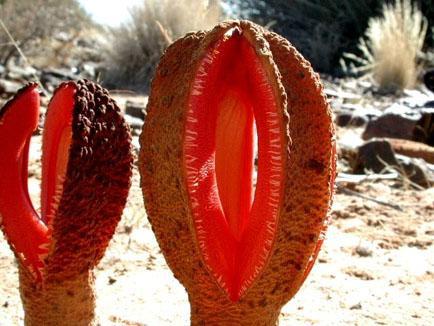 Plantas parasitarias
