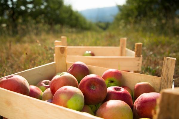 Tipos de contaminación en los alimentos - Cómo evitar la contaminación de los alimentos