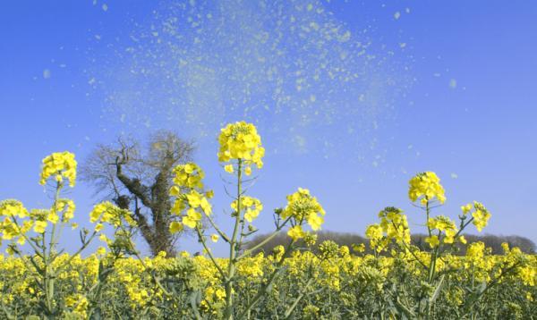 Qué es el polen y para qué sirve - Para qué sirve el polen de las flores