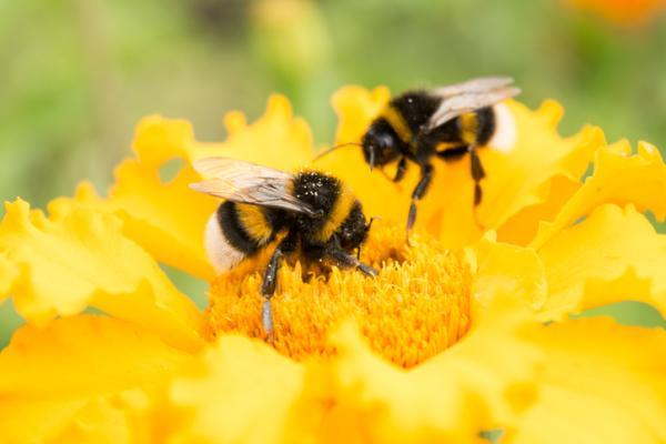 Qué es el polen y para qué sirve - Qué es el polen y dónde se encuentra