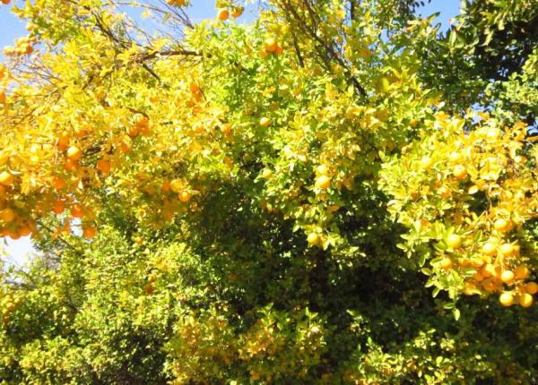 Clorosis en las plantas: qué es y cómo eliminarla - Clorosis en las plantas: qué es y causas