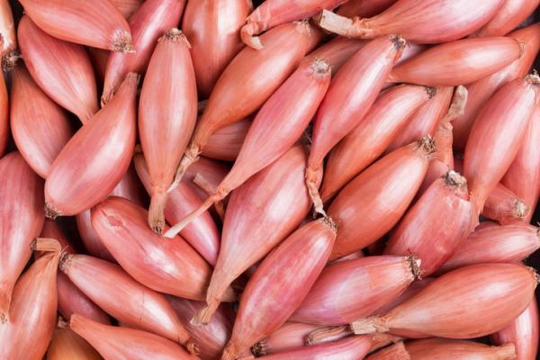Tipos de cebolla - Cebolla francesa o chalota