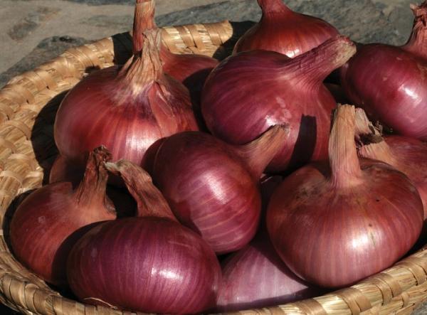 Tipos de cebolla - Ptujski Lük, uno de los tipos de cebollas menos conocidos