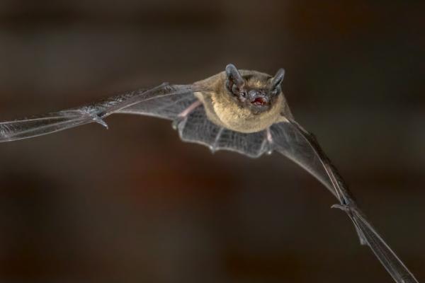 Ecosistema aéreo: qué es, características y tipos - Animales del ecosistema aéreo