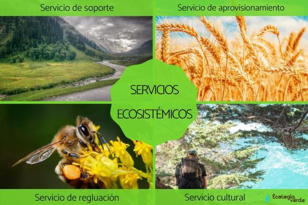 Servicios ecosistémicos: qué son, tipos y ejemplos
