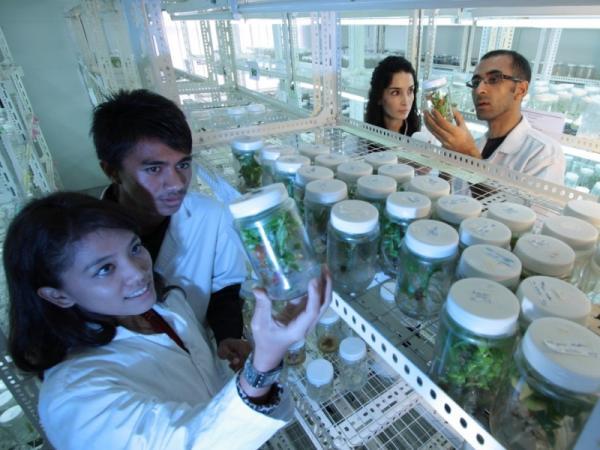 Qué es la biotecnología y para qué sirve - Ventajas e inconvenientes de la biotecnología
