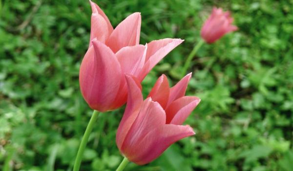 Qué son los pétalos y su función - Partes de los pétalos de las flores