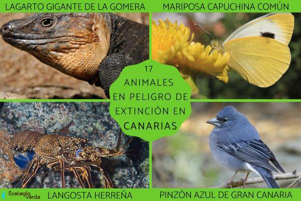 Animales en peligro de extinción en Canarias