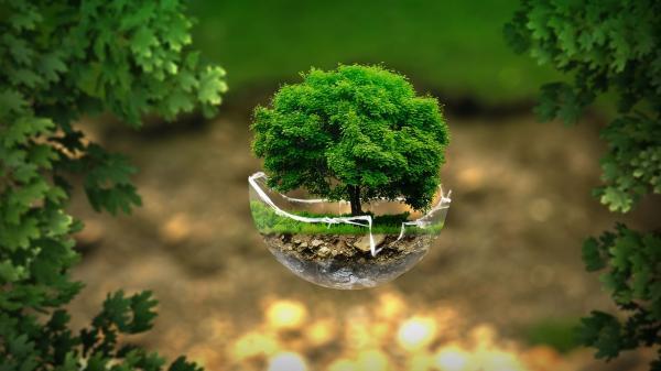 Qué es el ecologismo radical - El ecologismo radical y sus características