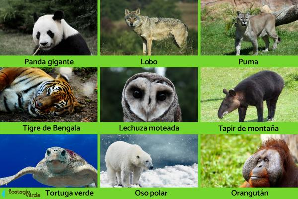 Especies bandera: qué son y ejemplos - Ejemplos de especies bandera