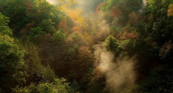 La importancia de los árboles para el medio ambiente - La importancia de los árboles para el ser humano