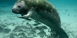 16 animales en peligro de extinción en Colombia