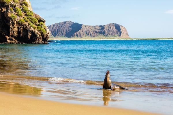 Flora y fauna de las Islas Galápagos - Características de las Islas Galápagos