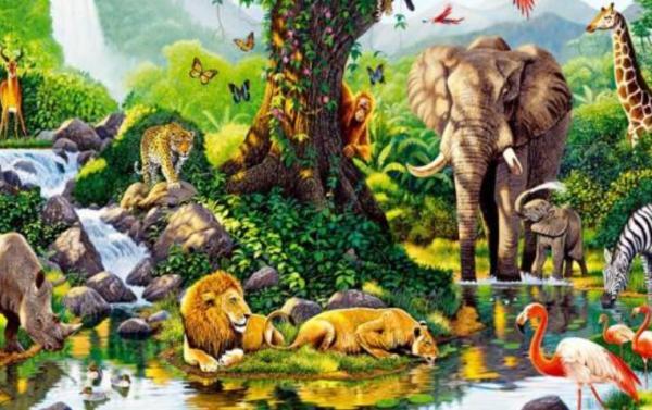 Sistemas ecológicos: qué son y ejemplos - Qué son los sistemas ecológicos