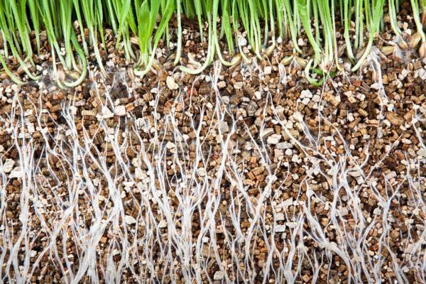 Vermiculita: qué es, usos y cómo hacerla - Usos de la vermiculita
