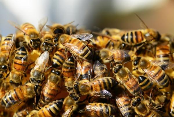 Cómo ahuyentar a las abejas